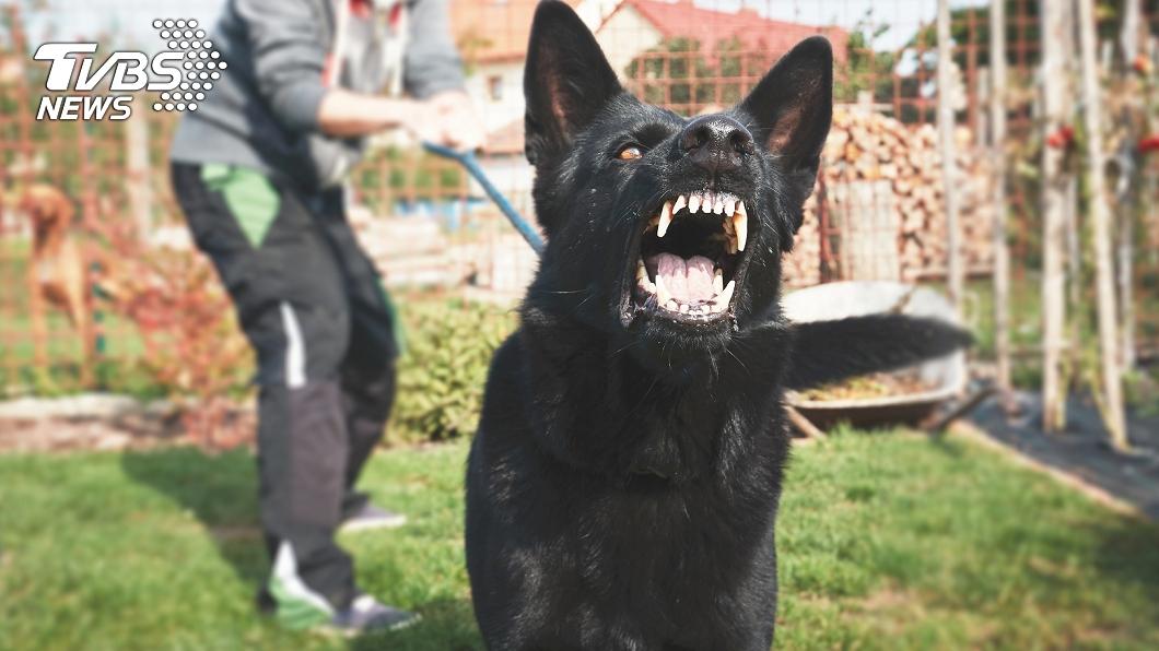 (示意圖,與事件無關。圖/TVBS) 6歲兄護妹搏鬥惡犬「縫90針」 霸氣喊:要死也是我死