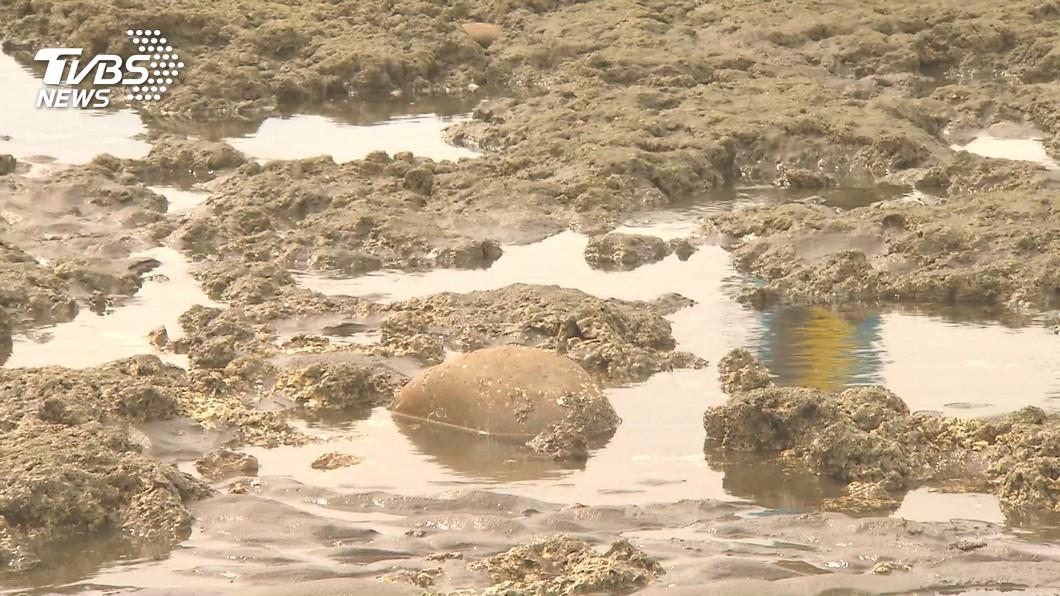 環團發起搶救藻礁公投連署。(圖/TVBS) 搶救藻礁公投連署倒數4天 尚缺24萬份