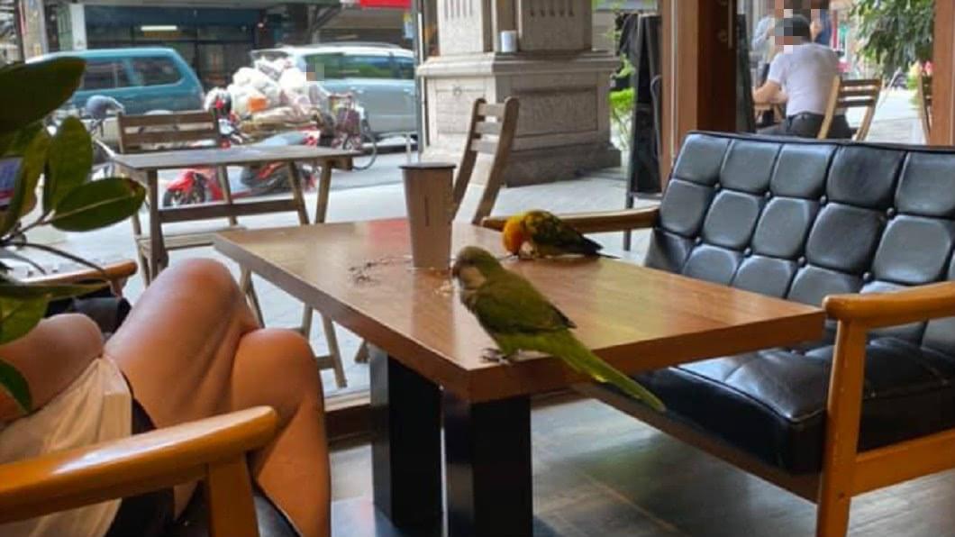 圖/翻攝自爆怨公社 帶2鳥喝咖啡!飼主「放任餐桌排泄」翹腳不管 網轟沒品