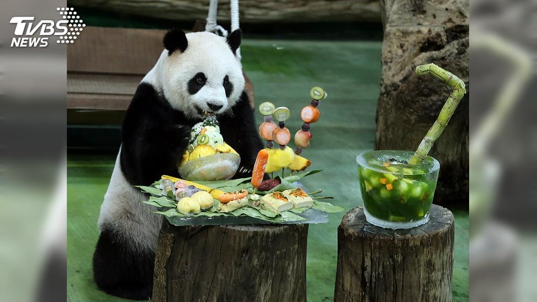 大貓熊「圓仔」今天過7歲生日。(圖/中央社) 「圓仔」慶7歲生日 動物園用7種台灣小吃特製蛋糕