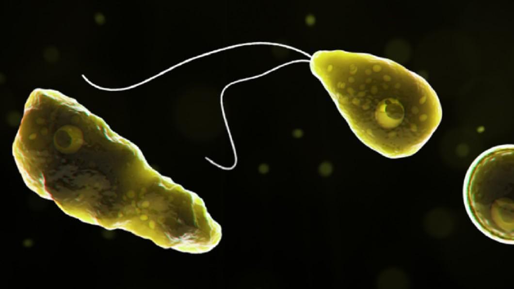 圖/翻攝自美國疾病管制與預防中心官網 美國佛州驚現恐怖「食腦蟲」 143人僅4人倖存超致命