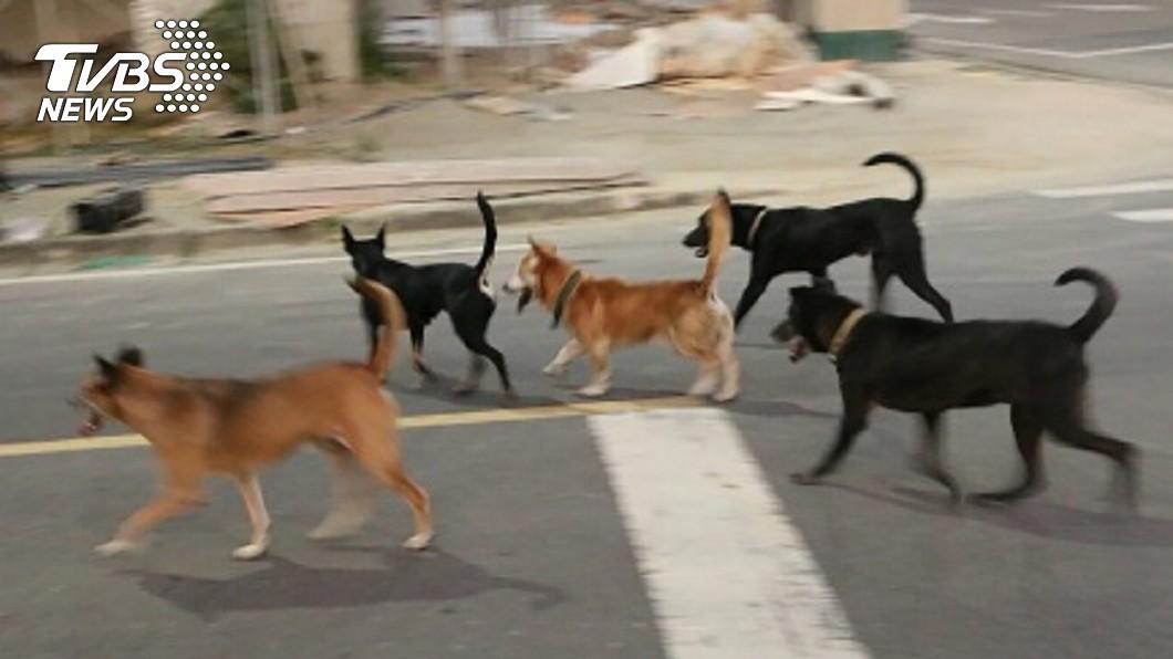 男子把4隻流浪幼犬抓走棄置路邊任由烈日曝曬,造成其中2隻不幸死亡。(示意圖/TVBS) 愛車被浪浪弄髒 男抓2幼犬棄路邊烈日曬死