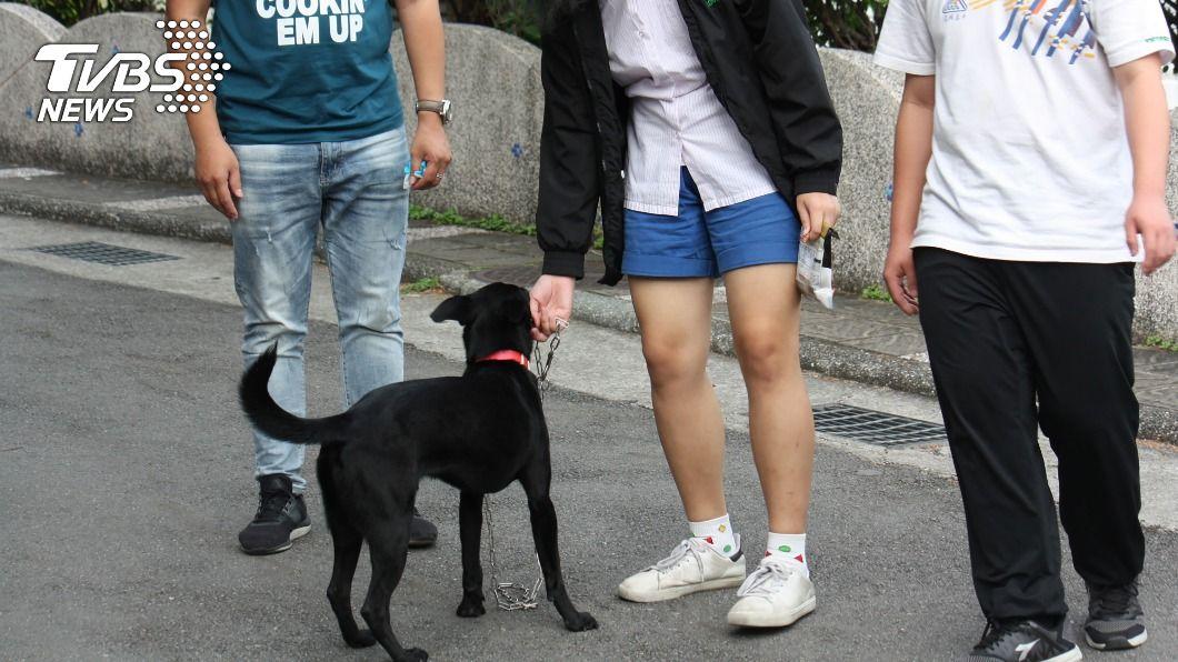 復興高中師生認養小黑狗成校園犬。(圖/新北市動保處提供) 浪浪奇幻漂流 小黑狗變身高中「復校長」