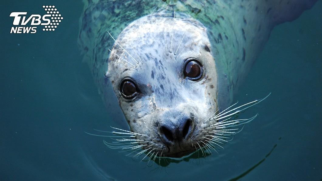 示意圖/TVBS 遊客棍棒暴打海豹 「昏死拖出海裡」只為讓孩拍照