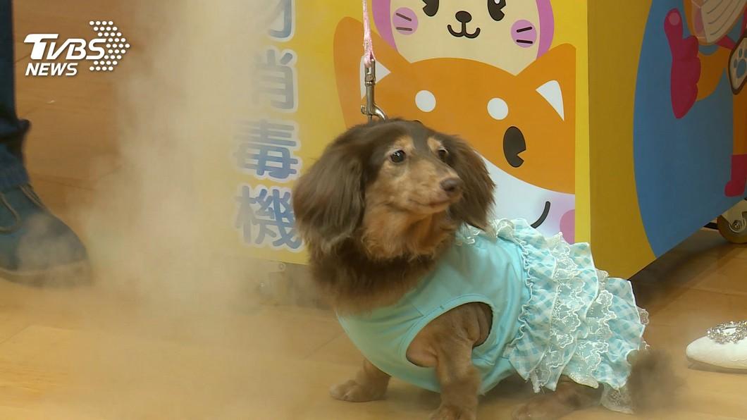 寵物健康生活站 消毒機保護毛小孩健康│TVBS新聞網