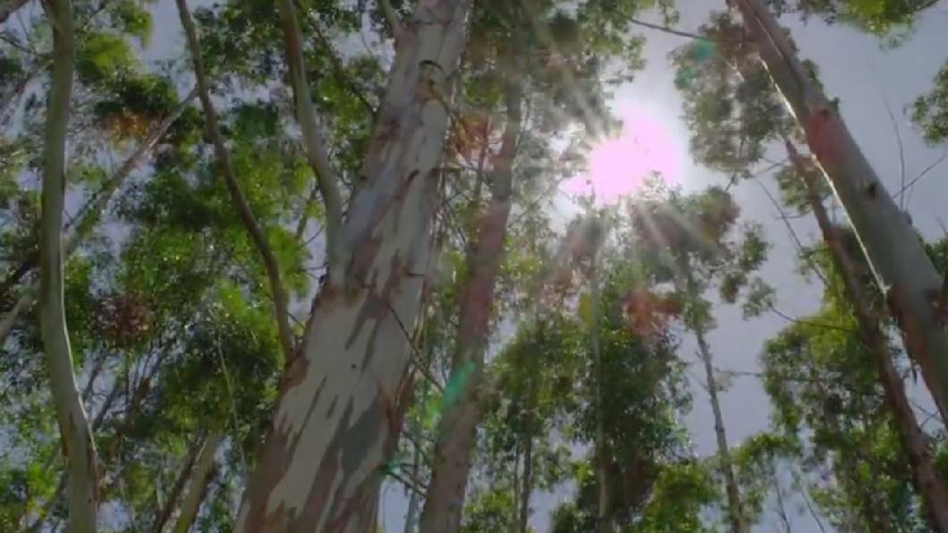 力抗氣候變遷 種樹減碳不如預期