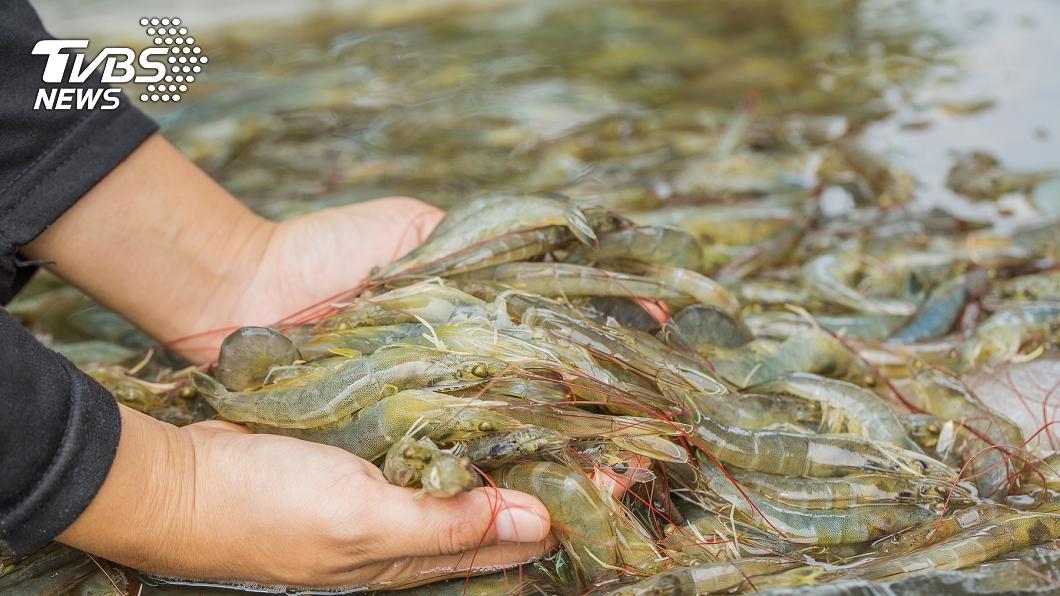 (示意圖,與事件無關。圖/TVBS) 他洗蝦被刺傷「手指發黑」慘被截 醫驚:晚1天恐沒命