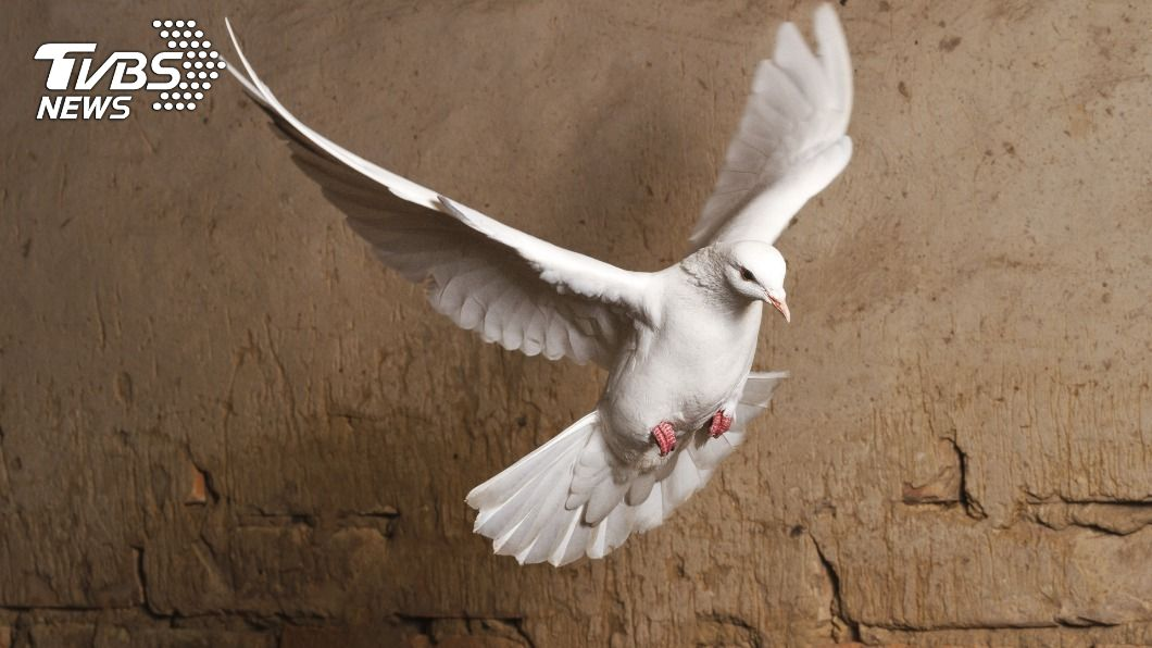 (示意圖/TVBS) 詭異!白鴿飛到一半「定格」空中 內行網友揭原因