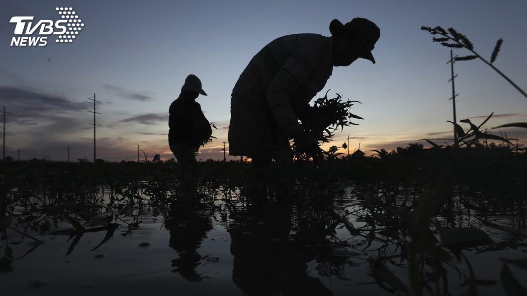 柬埔寨首都金邊的溼地遭摧毀,逾百萬人正面臨洪患加劇和失去生計的風險。(圖/達志影像美聯社) 柬埔寨首都擴張摧毀溼地 逾百萬人安全生計堪憂