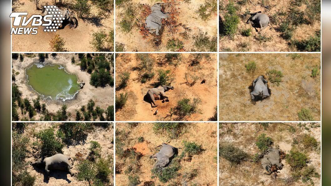 非洲波札那野生動物暨國家公園出現數百頭大象離奇死亡現象。(圖/達志影像路透社) 非洲數百隻大象死亡謎團 真相曝光了