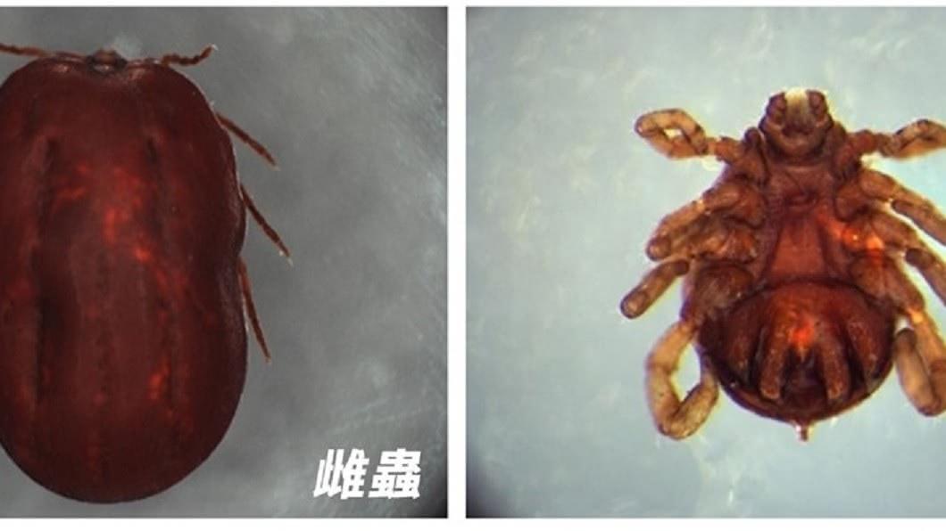 「新型布尼亞病毒」又稱「發熱伴血小板減少綜合徵病毒」(圖/翻攝自疾管署網站) 大陸爆「新布尼亞病毒」7人死亡 醫示警:恐人傳人