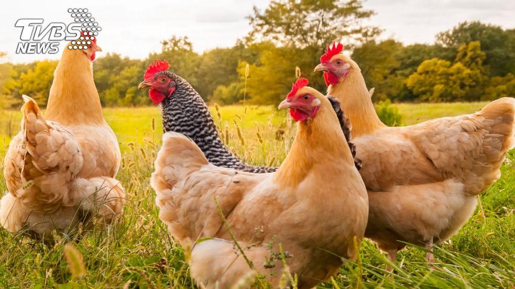 一名婦人總是學雞叫。(示意圖/shutterstock 達志影像) 清晨就咕咕叫…她堅稱自己是雞! 家人全看傻眼