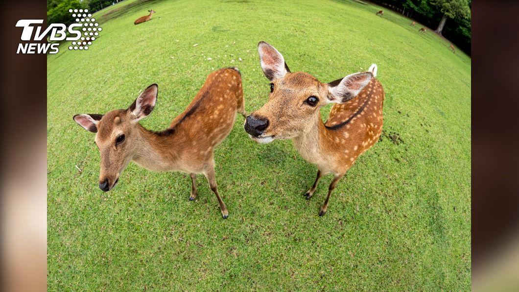 (示意圖/shutterstock達志影像) 遊客開心餵食 野鹿下一刻被「拖進樹林槍斃」!