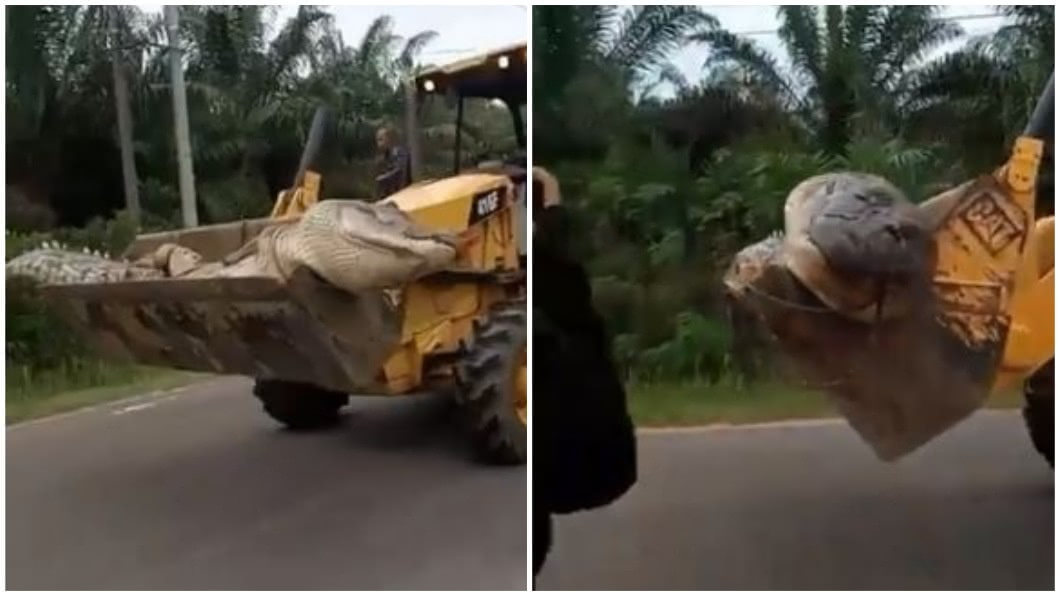 印度1處村莊的村民,合力捕獲了1條重約500公斤的巨鱷。(圖/翻攝自YouTube合成) 捕獲500公斤巨鱷 村民斬首肢解稱:牠是惡魔的化身