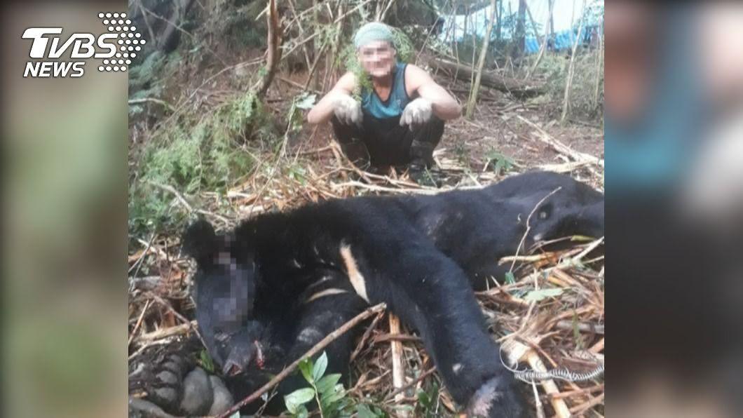 盜伐樹林還不夠!山老鼠竟獵殺台灣黑熊吃下肚