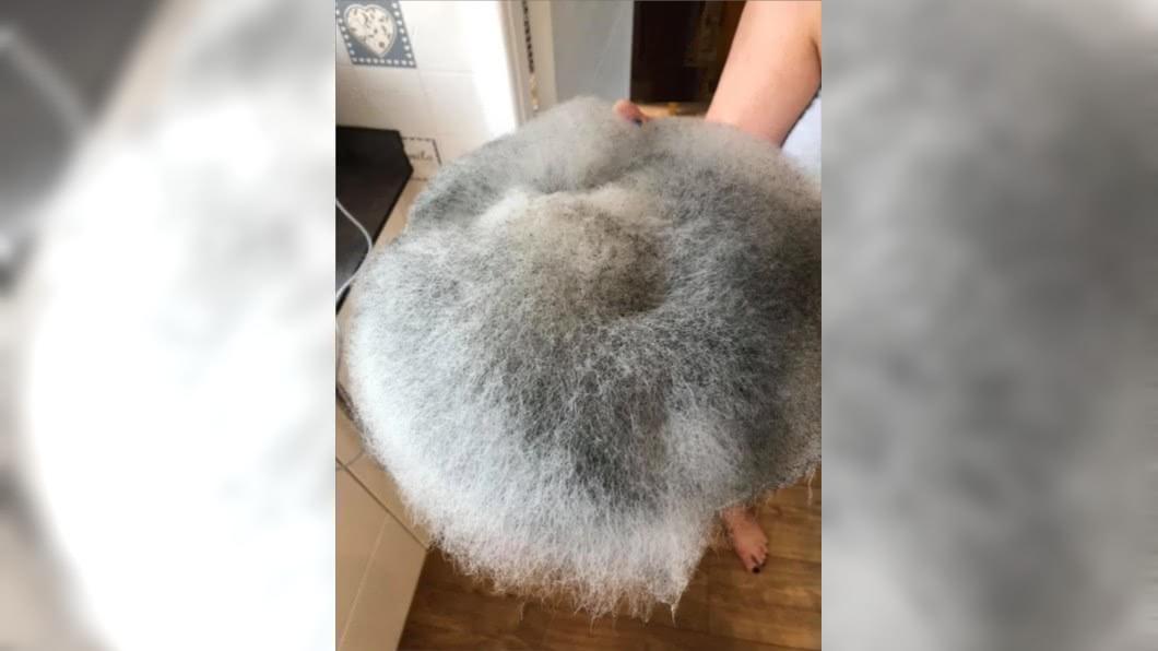圖/翻攝自臉書 微波爐驚現「巨型長毛球體」 驚悚真面目曝光…媽崩潰了