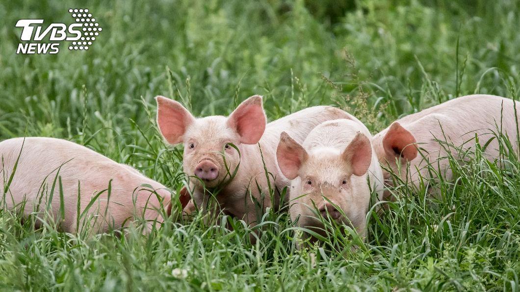 (示意圖/shutterstock 達志影像) 內蒙古牧民上街遊行 抗議草原養豬破壞環境