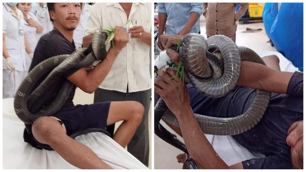 越南1名男子徒手抓眼鏡王蛇時大腿被咬了一口,緊急被送往醫院注射10瓶血清才保住1命。(圖/翻攝自臉書) 男徒手抓3米眼鏡王蛇大腿被咬 送醫注10瓶血清保小命