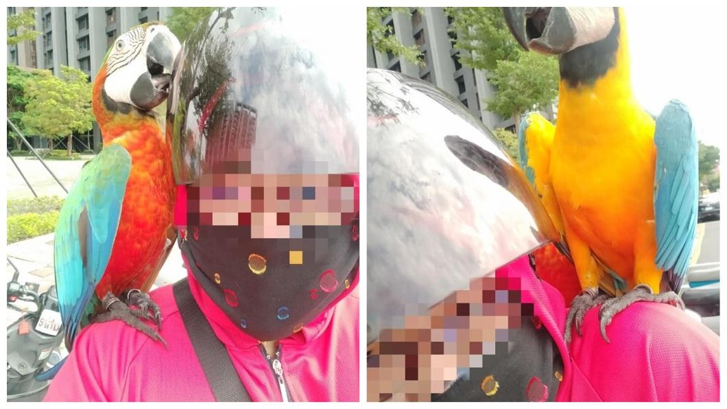 一名女網友分享自己外出買東西時,突然有一對嬌客停在她的肩膀上。(圖/翻攝自爆廢公社二館) 女外出遇飛來豔福 彩虹精靈成對停雙肩成「左右護法」