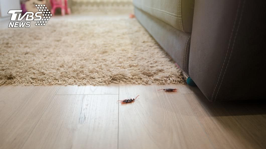 杭州一對情侶承租套房,沒想到才搬進去,整間屋子全是蟑螂。(示意圖/shutterstock 達志影像) 租套房住到蟑螂屋 情侶想搬離房東拒:下點藥就好啦