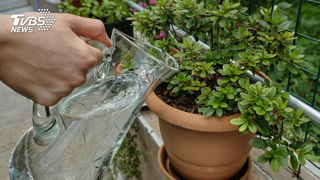 許多人家中會種植花草放在陽台上,定時幫植物澆水。(示意圖/shutterstock 達志影像) 穿四角褲打赤膊到陽台澆花 男被鄰居檢舉「變態加87」