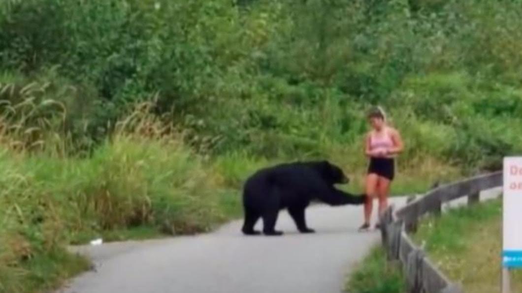 圖/翻攝自@HowesNathan推特 慢跑遇黑熊 加拿大女子竟被熊掌摸小腿