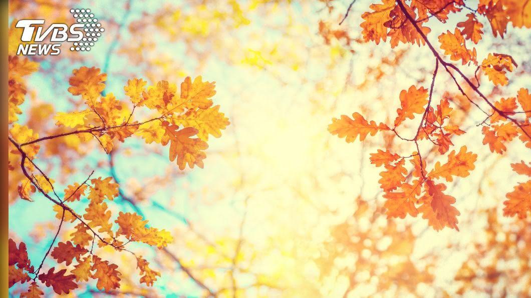 節氣「白露」過後天氣逐漸轉涼。(示意圖/shutterstock 達志影像) 白露後天轉涼!預防秋季疾病 醫曝7招:吃蒜、戒西瓜