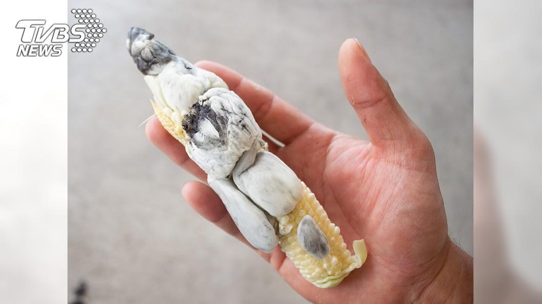 別看這根玉米筍長很醜,其實營養價值超高。(示意圖/shutterstock達志影像) 好市多玉米筍「噴肉球」想退貨 網勸:松露級賺到