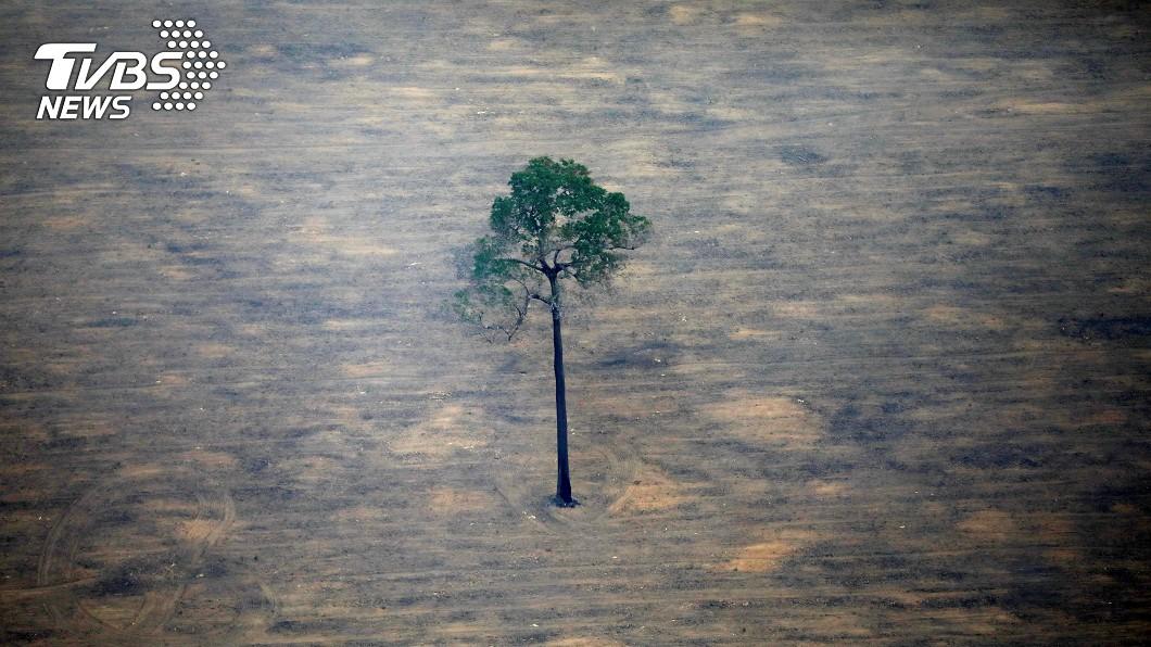 巴西有酒商推出新啤酒,訴求拯救亞馬遜雨林。(圖/達志影像路透社) 酒商護亞馬遜雨林! 籲少砍樹「啤酒就降價」