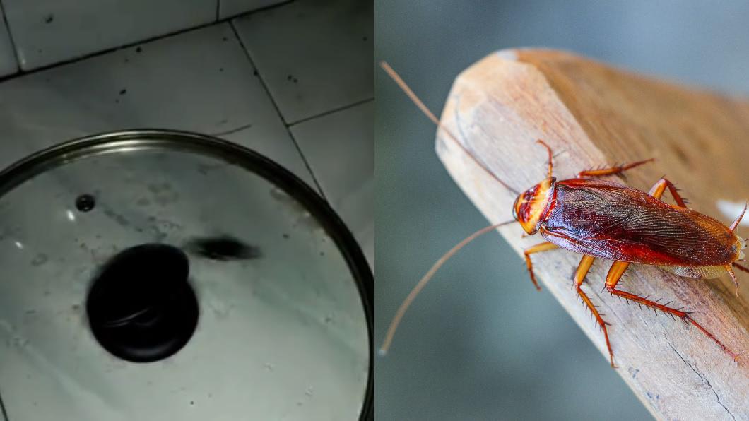 蟑螂在鍋蓋內存活20天仍活跳跳。(圖/翻攝自微博、shutterstock達志影像) 鍋蓋罩小強!女不敢打想「餓死它」 20天後崩潰了
