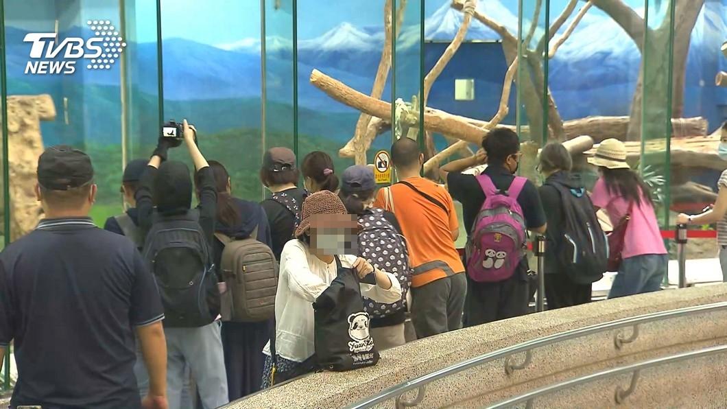 女子排隊許久才看到無尾熊,竟遭到後方家長讓位。(非當事人,示意圖/TVBS) 「我兒想看」家長搶第一排逼讓位!她被迫走人:排很久