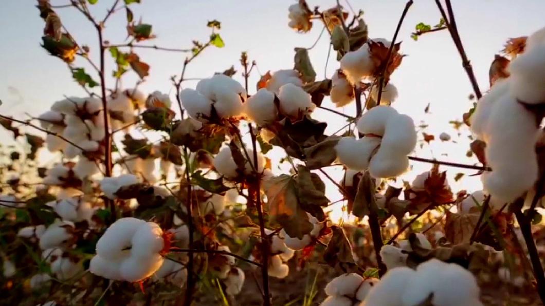 血染的新疆棉! 每五件棉衣就有一件