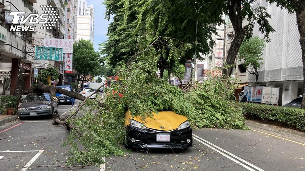 台中路樹倒下壓到車輛。(圖/中央社) 台中路樹攔腰斷2車被砸 車流回堵改道