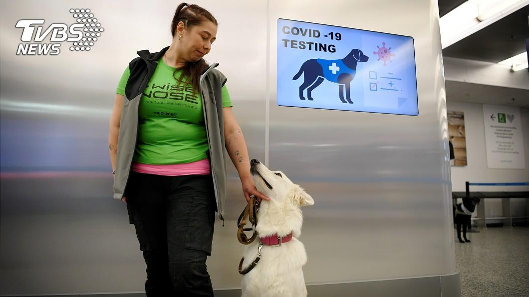 芬蘭赫爾辛基-萬塔機場採用4隻嗅探犬協助檢疫。(圖/達志影像路透社) 準確率近100%!芬蘭機場靠「嗅探犬」揪出確診者