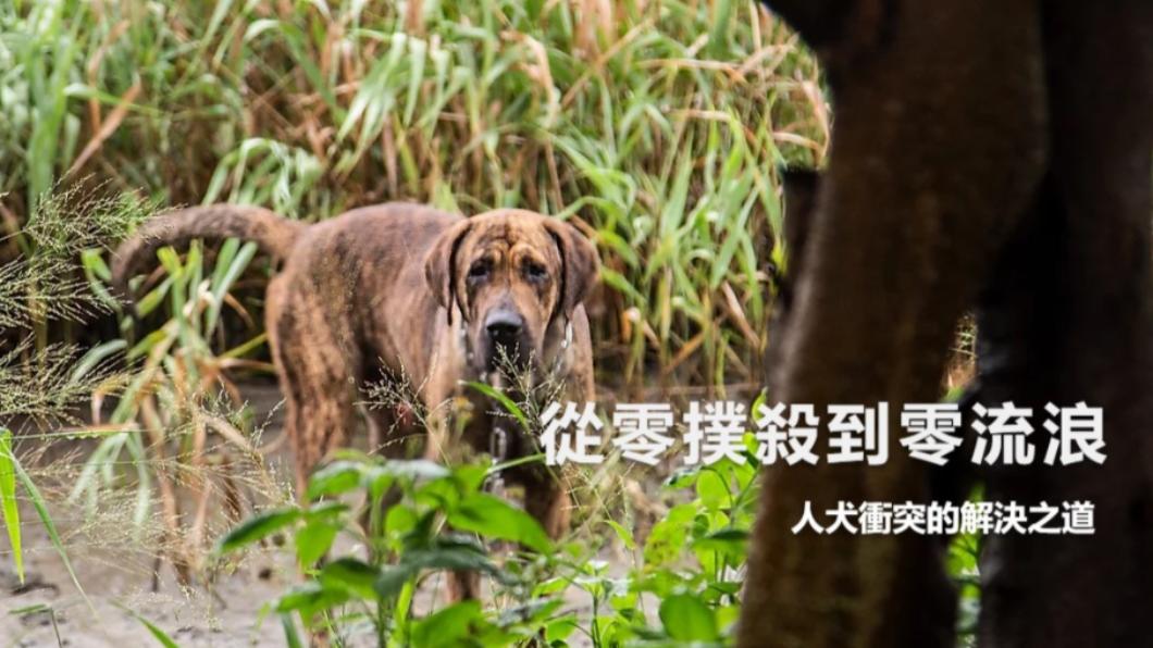2020《全球華文永續報導獎》學生組融媒體類優等作品《從零撲殺到零流浪 人犬衝突的解決之道》 從零撲殺到零流浪 人犬衝突的解決之道