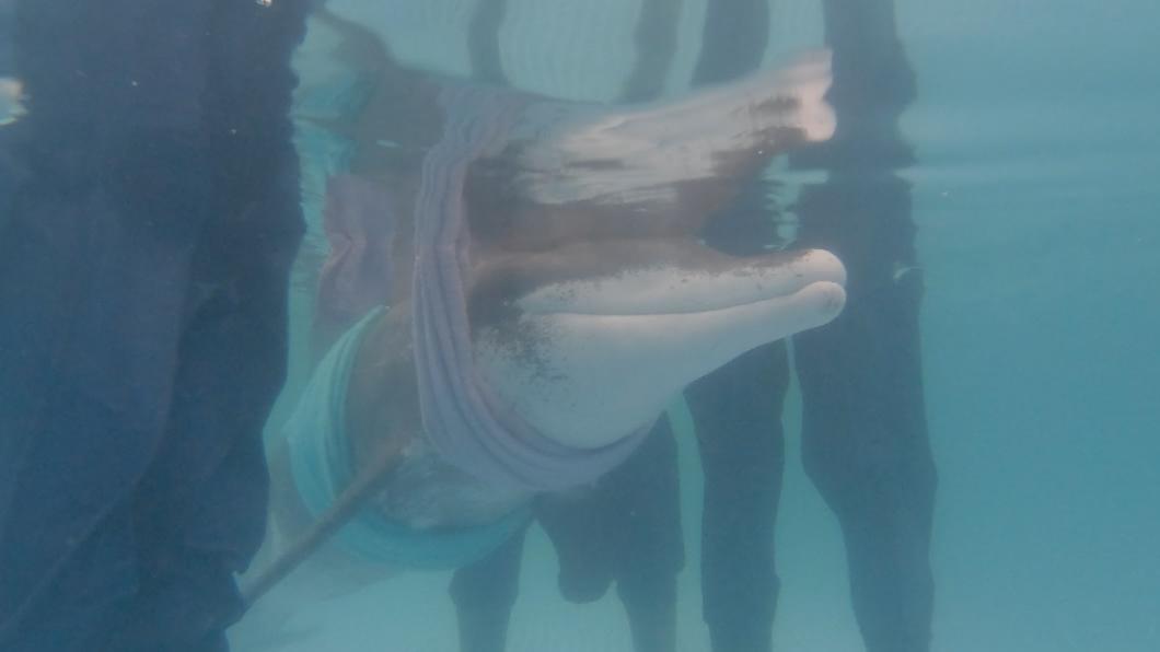 2020《全球華文永續報導獎》學生組長影片類首獎作品《鯨在八斗子》,由臺灣藝術大學張弘榤採訪報導。 鯨在八斗子
