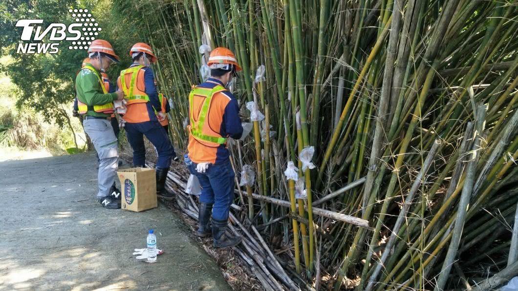 清潔隊員動員防治避免登革熱再擴大。(圖/中央社) 新北25人確診登革熱 百名清潔員出動「塑膠袋包竹」