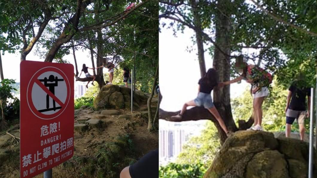 女子行徑危險。(圖/翻攝自在臉書社團「爆廢公社」) 玩命拍美照?女「崖邊爬樹」不顧警告 他酸:申請國賠嗎
