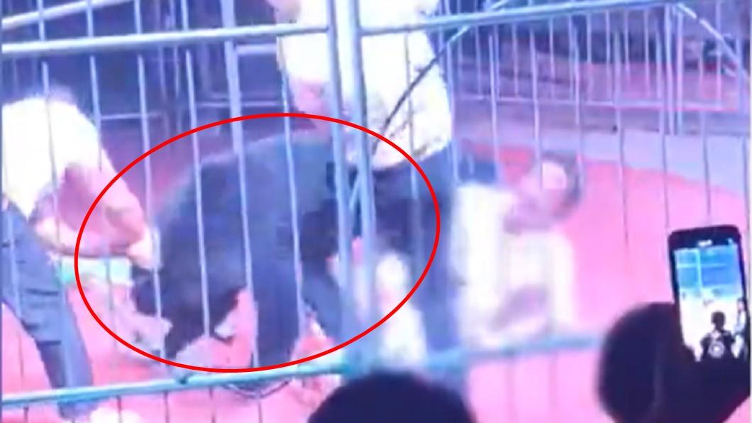 黑熊猛咬不放。(圖/翻攝自微博) 200公斤黑熊「踩爆撕肉」!馴獸師絕望60秒全都錄