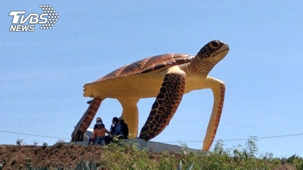 澎湖望安島設立大型綠蠵龜裝置藝術,期盼海龜年回到故鄉棲息產卵。(圖/中央社) 4米高綠蠵龜、玳瑁裝置吸睛 澎湖望安地標新亮點