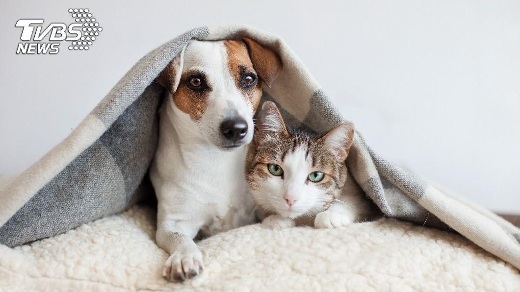 近年愈來愈多人養起家寵。(示意圖/shutterstock 達志影像) 不知該當貓奴還狗僕?5種生活好處大比拚