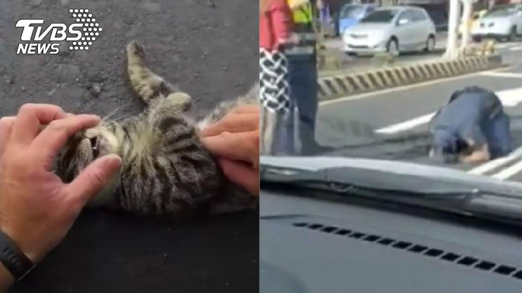 員警跪地為遭撞貓咪進行CPR。(圖/TVBS、翻攝自「我是土城人 我愛土城區」臉書社團) 流浪貓遭撞!土城暖警跪地「對口CPR」20分鐘