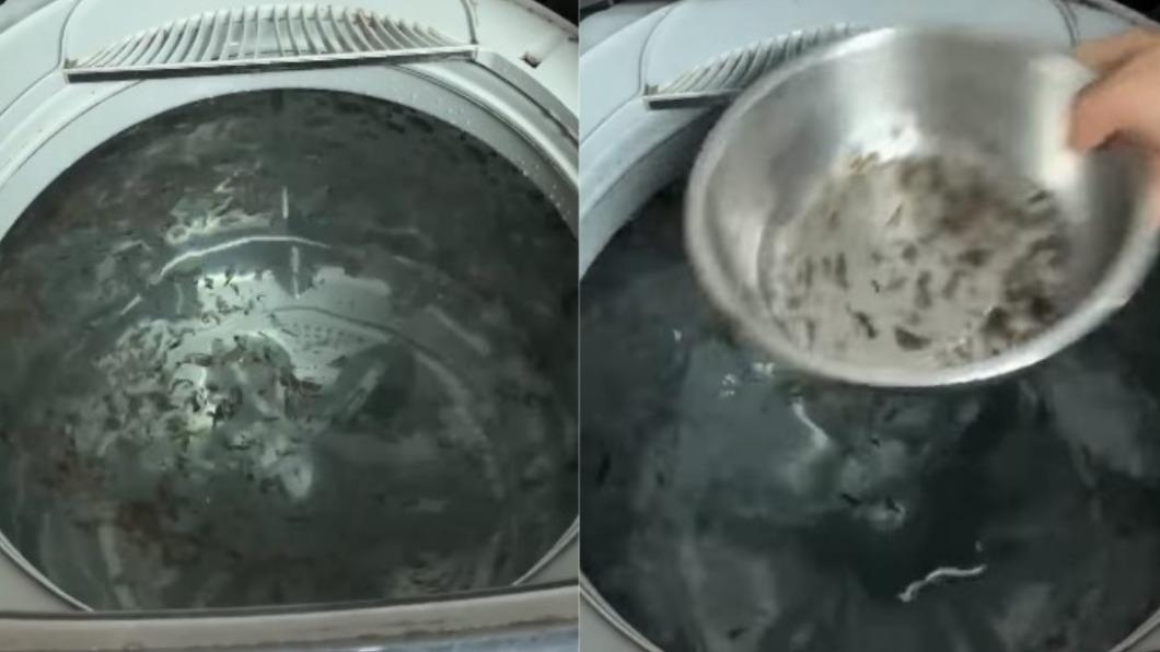 網友分享家中洗衣機漂滿黑色髒污。(圖/翻攝自爆系知識家) 洗衣機內漂滿「黑髮菜」 內行解答:1種粉別再加!