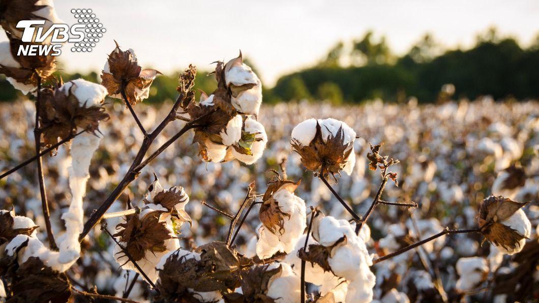 (示意圖/shutterstock 達志影像) 兩國關係再惡化!陸擴大對澳貿易報復 鎖定進口棉花