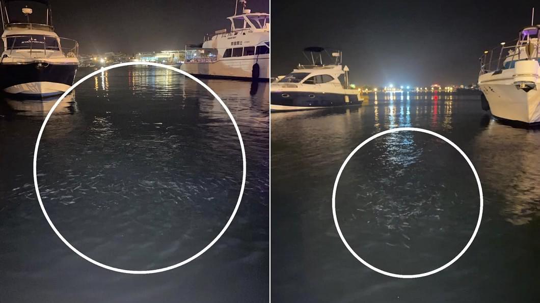 安平漁人碼頭「魚群炸出海面」…隨後連2震!當地人嚇傻