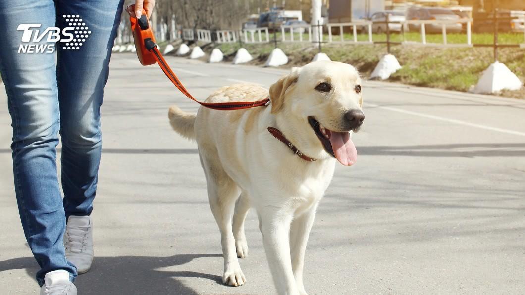 許多有飼養狗狗的民眾,平日都會有遛狗的習慣。(示意圖/shutterstock 達志影像) 辣妹把男友當寵物狗 「項圈栓脖」逛超市眾人全看傻