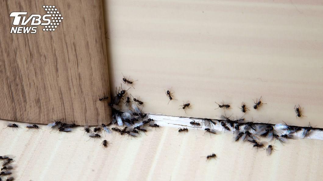 女子在網上分享除蟻成效,並比喻像辦桌。(示意圖/shutterstock 達志影像) 暖心幫螞蟻「辦流水席」 開6桌無限供應結局催淚