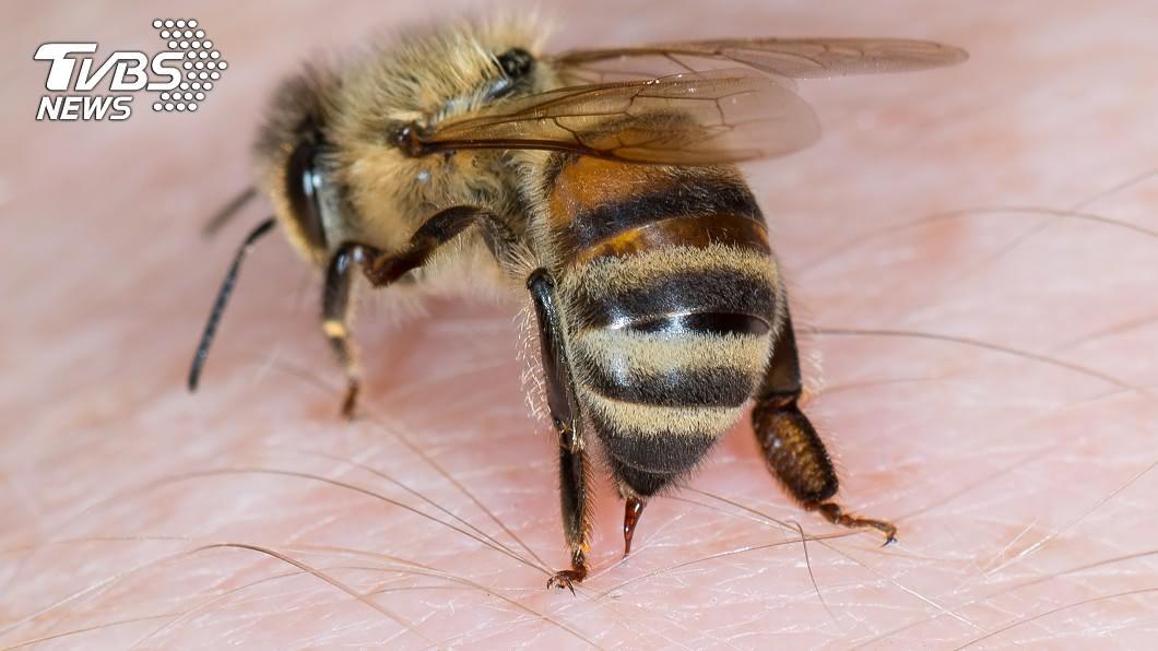 民眾騎機車在路上慘遭蜜蜂「自殺攻擊」。(示意圖/shutterstock 達志影像) 衰男手遭蜂螫變麵龜 就醫回程再一隻「鑽安全帽」崩潰
