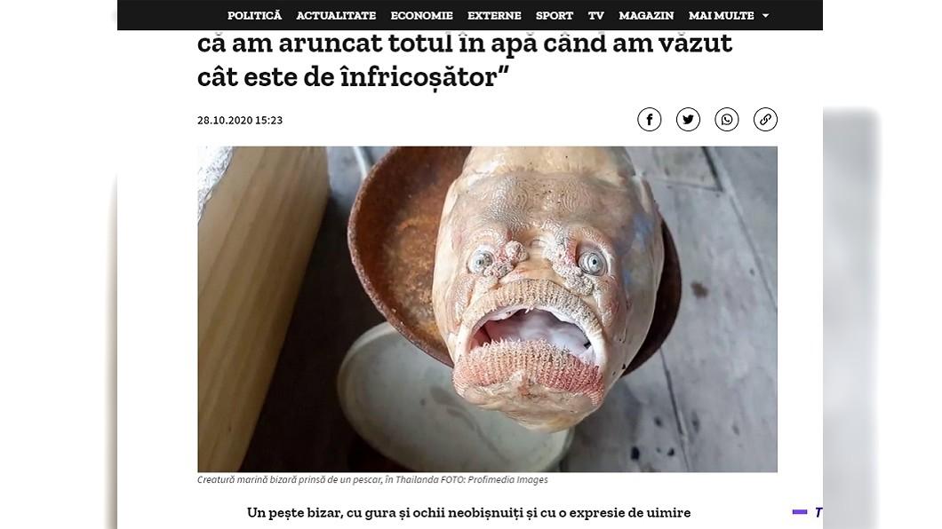 (圖/翻攝自digi24) 誰敢吃?凸眼大嘴「人面魚」發狂死 漁民抖:怕招來厄運!