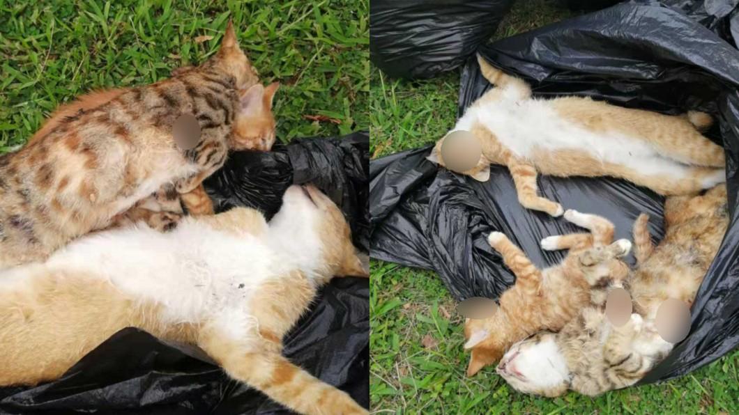 8隻流浪貓無故遭不明人士虐殺。(圖/翻攝自紅星新聞) 毒打8貓狠塞垃圾袋 母貓護兒「淒厲悲鳴」如煉獄